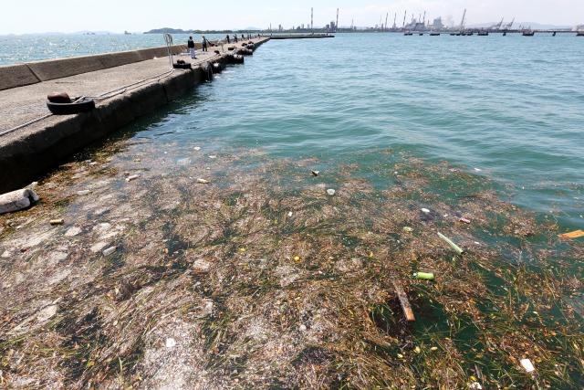 水銀による海洋汚染が多くの犠牲者を出しました。